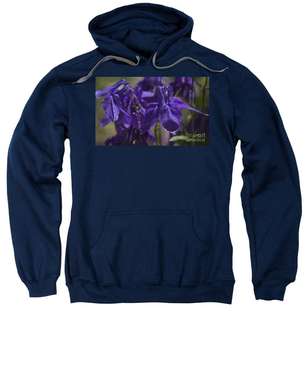 Columbine Sweatshirt featuring the photograph Purple Colimbine 1 by Teresa Mucha