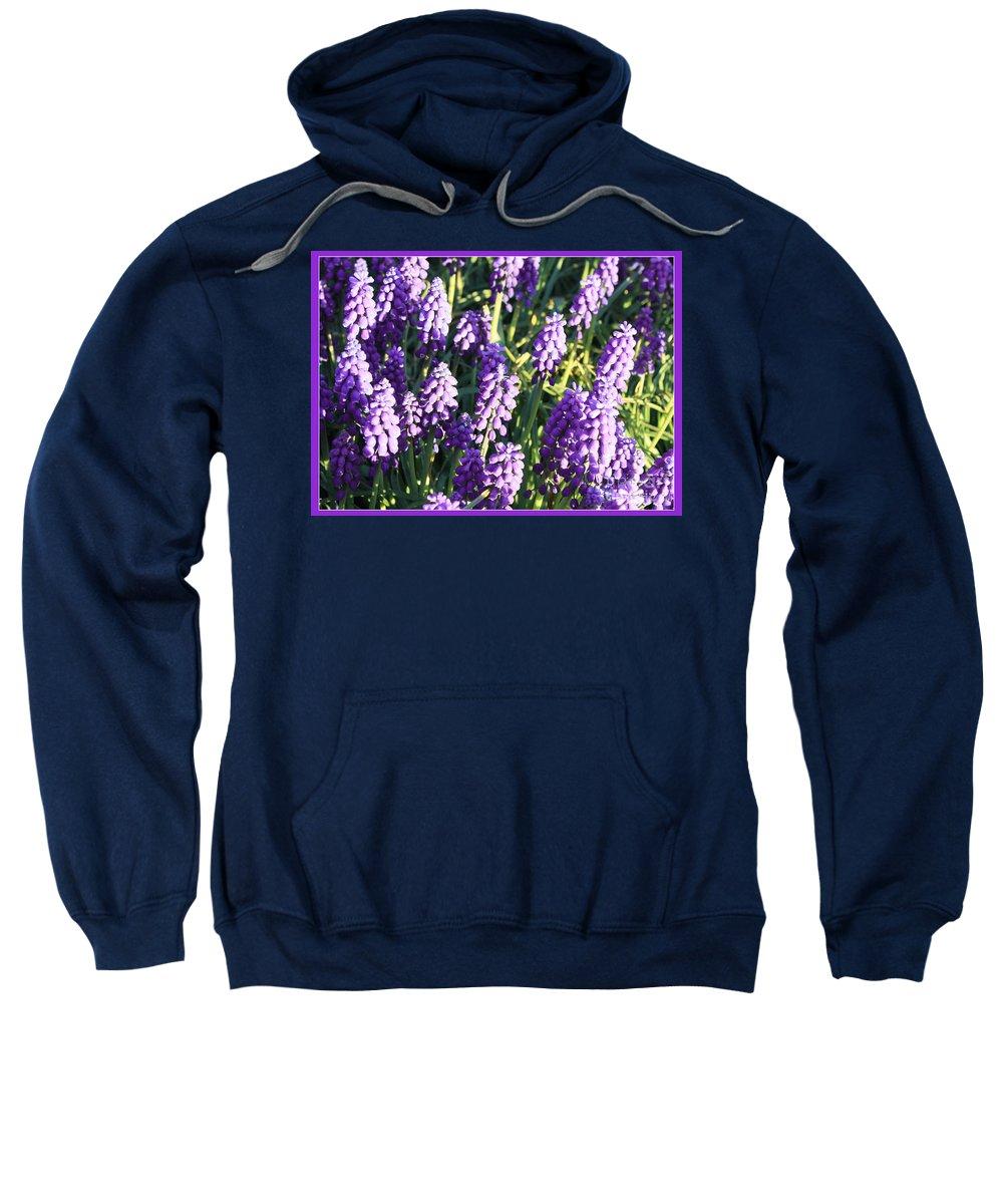 Grape Hyacinth Sweatshirt featuring the photograph Purple Grape Hyacinth by Carol Groenen