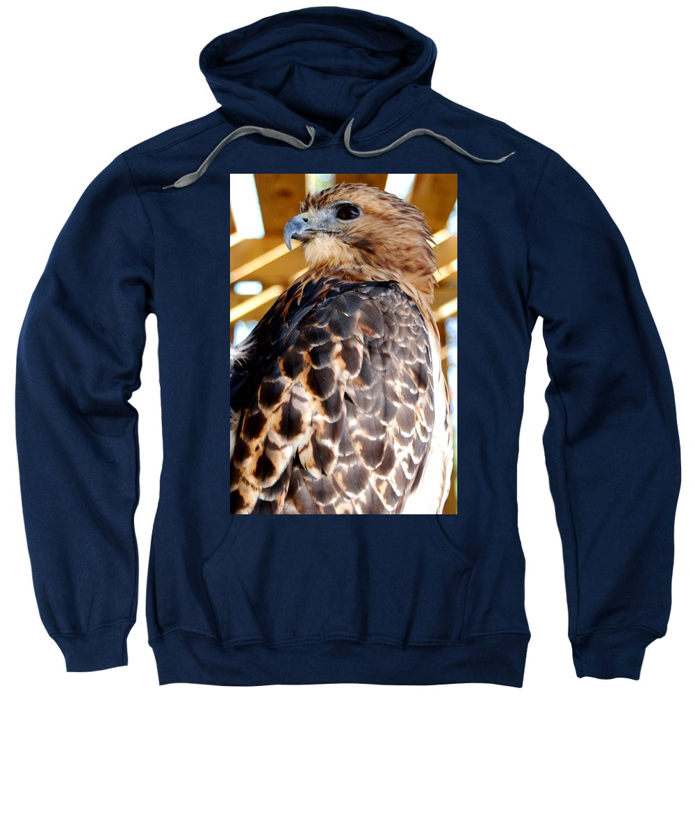 Red-tailed Hawk Sweatshirt featuring the photograph Red Tailed Hawk by Optical Playground By MP Ray