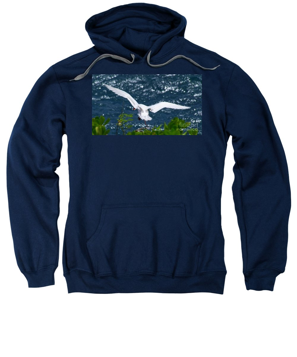 Red Tail Sweatshirt featuring the photograph Red Tailed Tropic Bird by Mary Deal