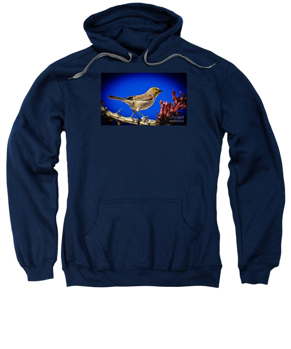 Birds Sweatshirt featuring the photograph Resting Verdin by Robert Bales