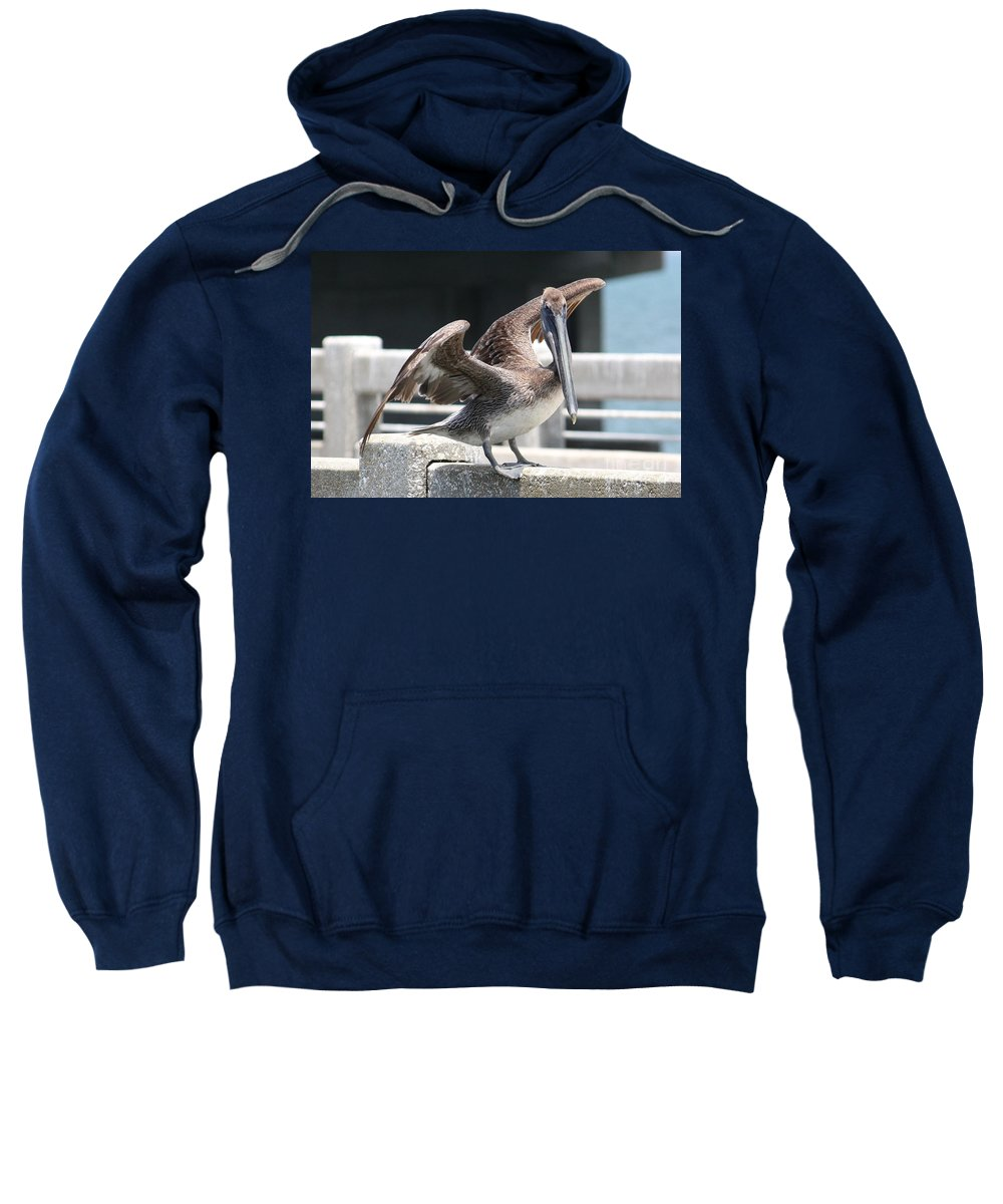 Pelecanus Occidentalis Sweatshirt featuring the photograph Pier Pelican by Carol Groenen