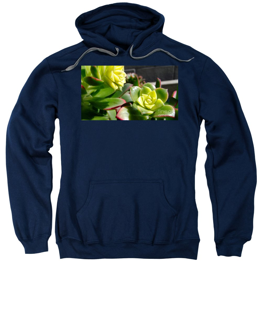 Flowers Sweatshirt featuring the photograph Succulent Bloom by Alan M Thwaites