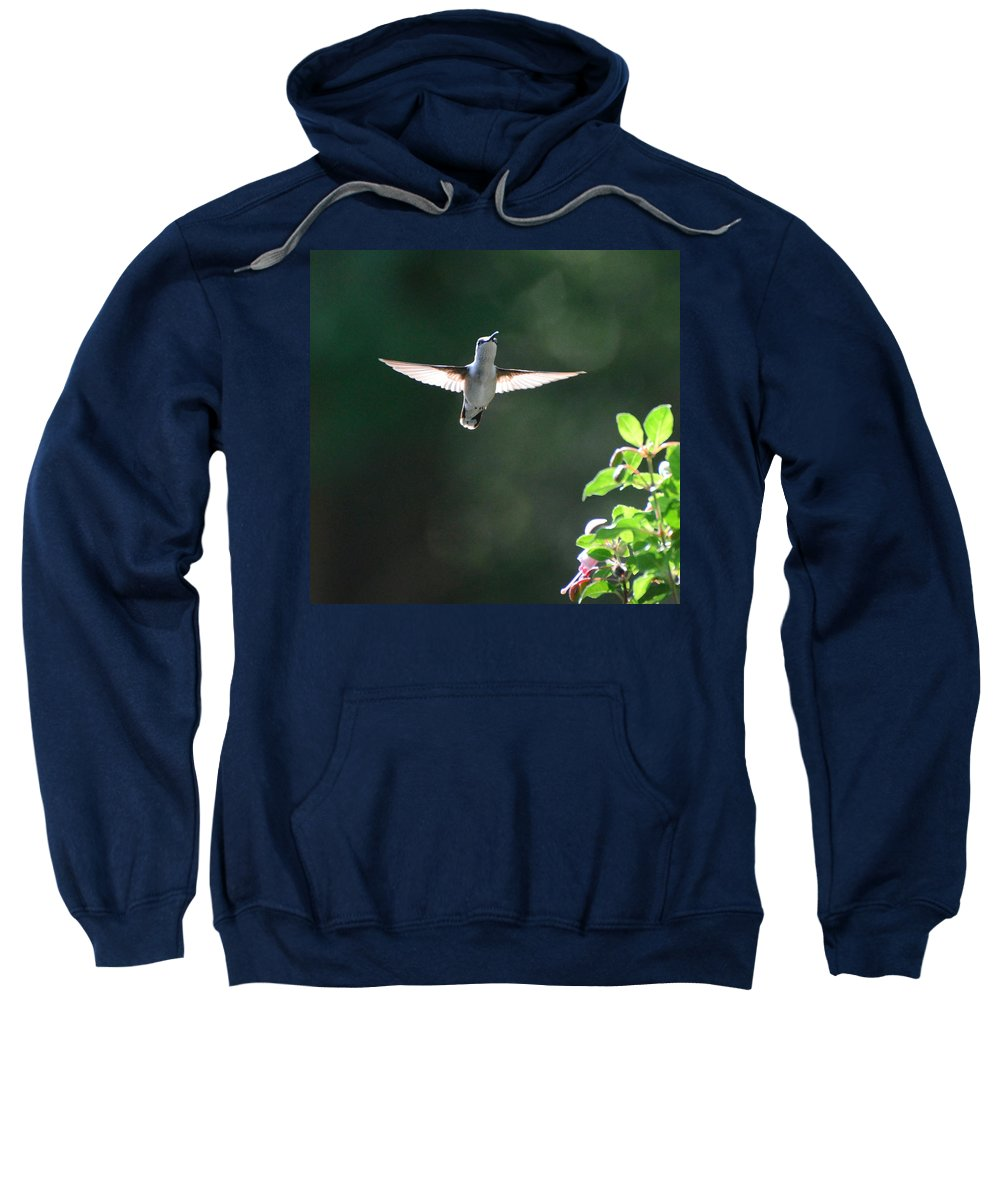 Hummingbird Sweatshirt featuring the photograph Sunlit Wings by Amy Porter