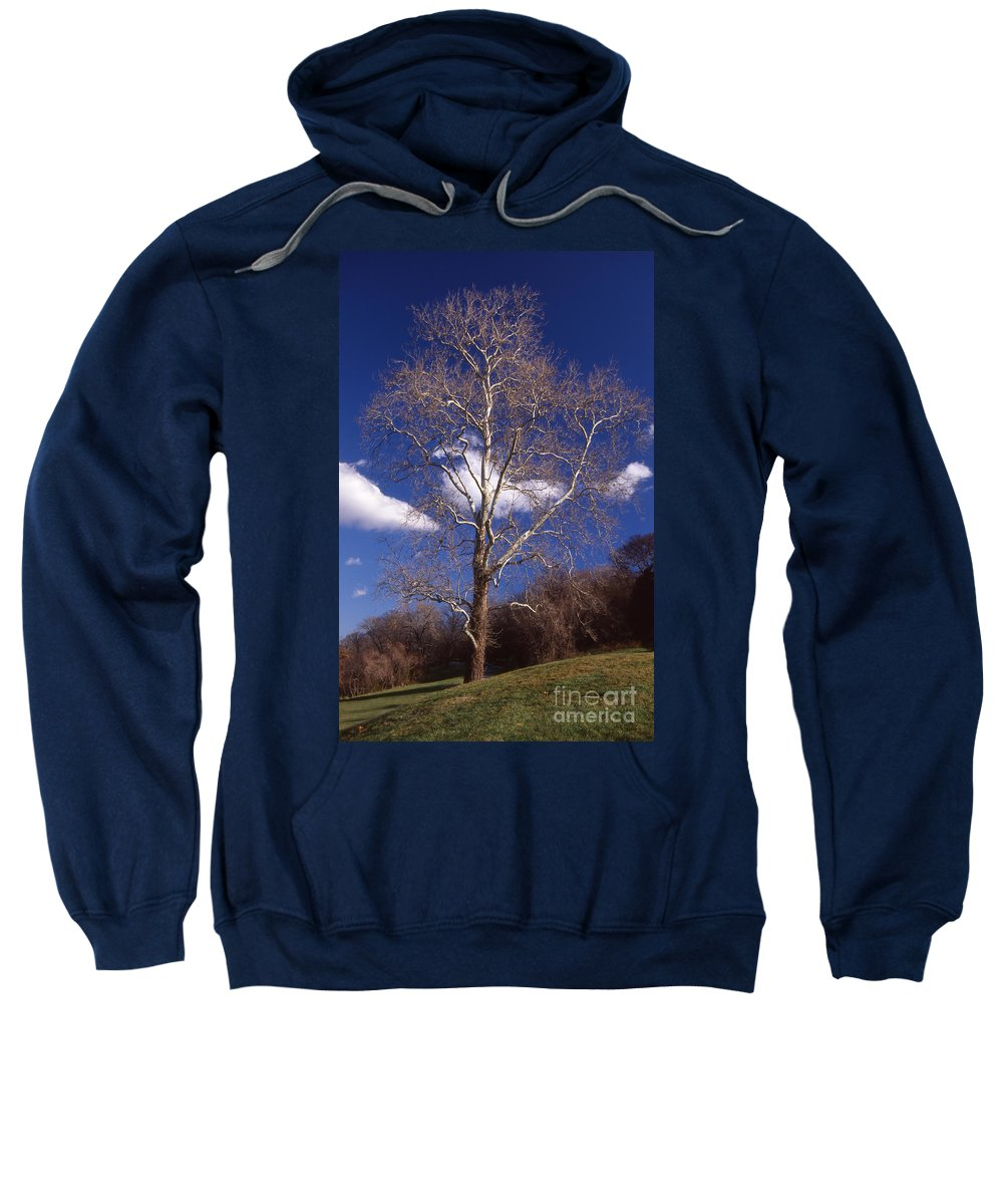 Scenic Tours Sweatshirt featuring the photograph Sycamore On The Hill by Skip Willits