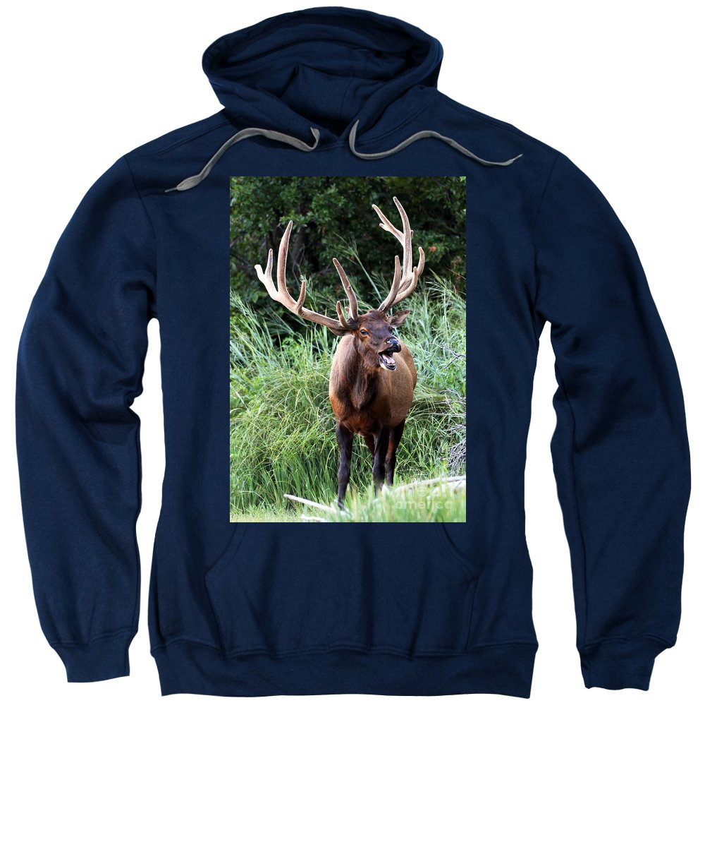 Animal Sweatshirt featuring the photograph Talk To Me by DS Dodd