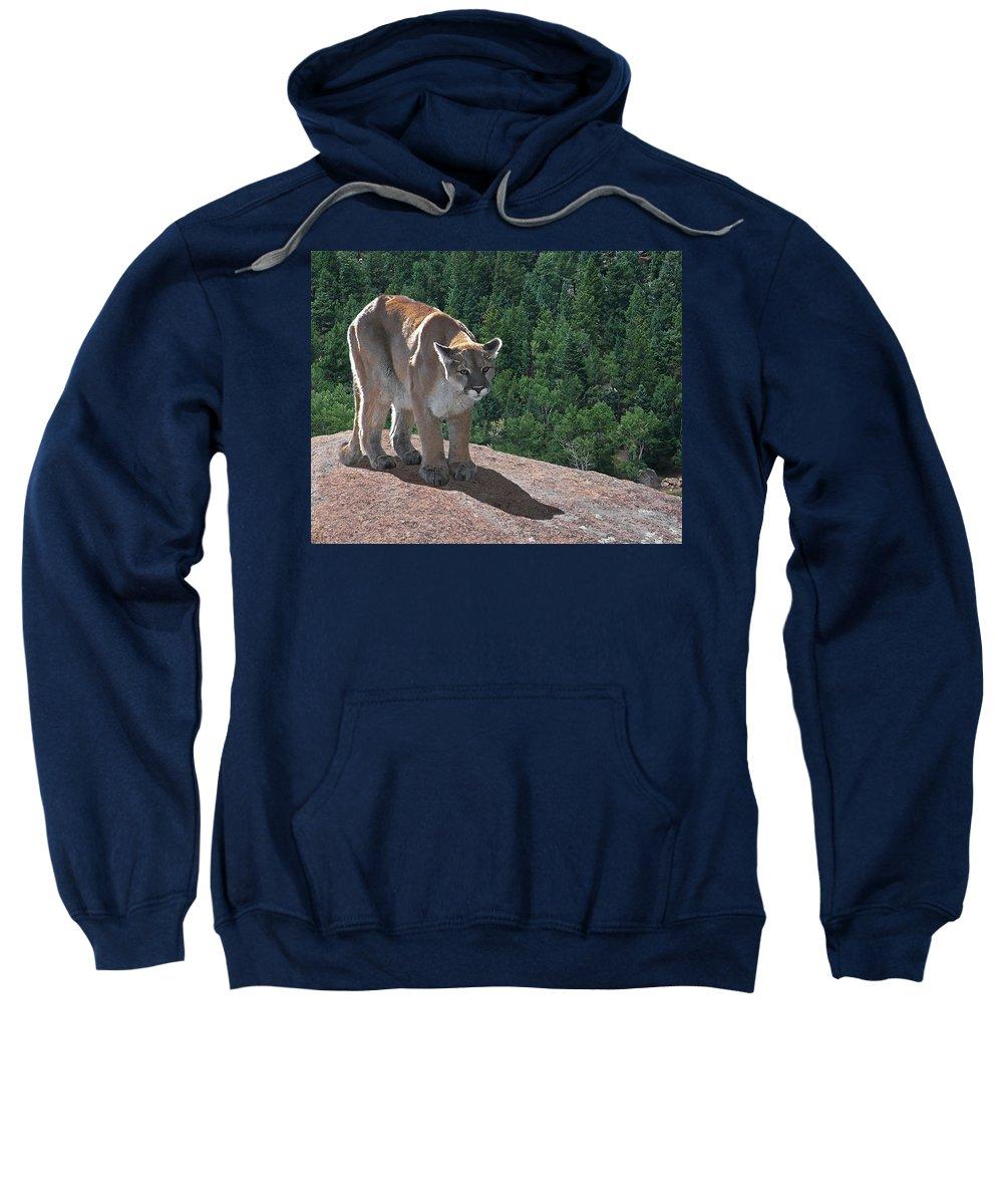 Cats Sweatshirt featuring the digital art The Cougar 1 by Ernie Echols