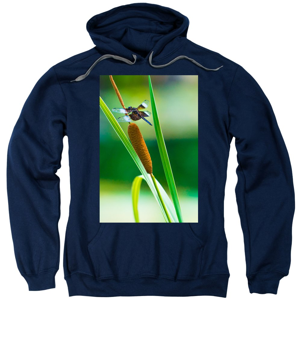 Dragon Fly Sweatshirt featuring the photograph The Dragon by Jacquelyn Crady
