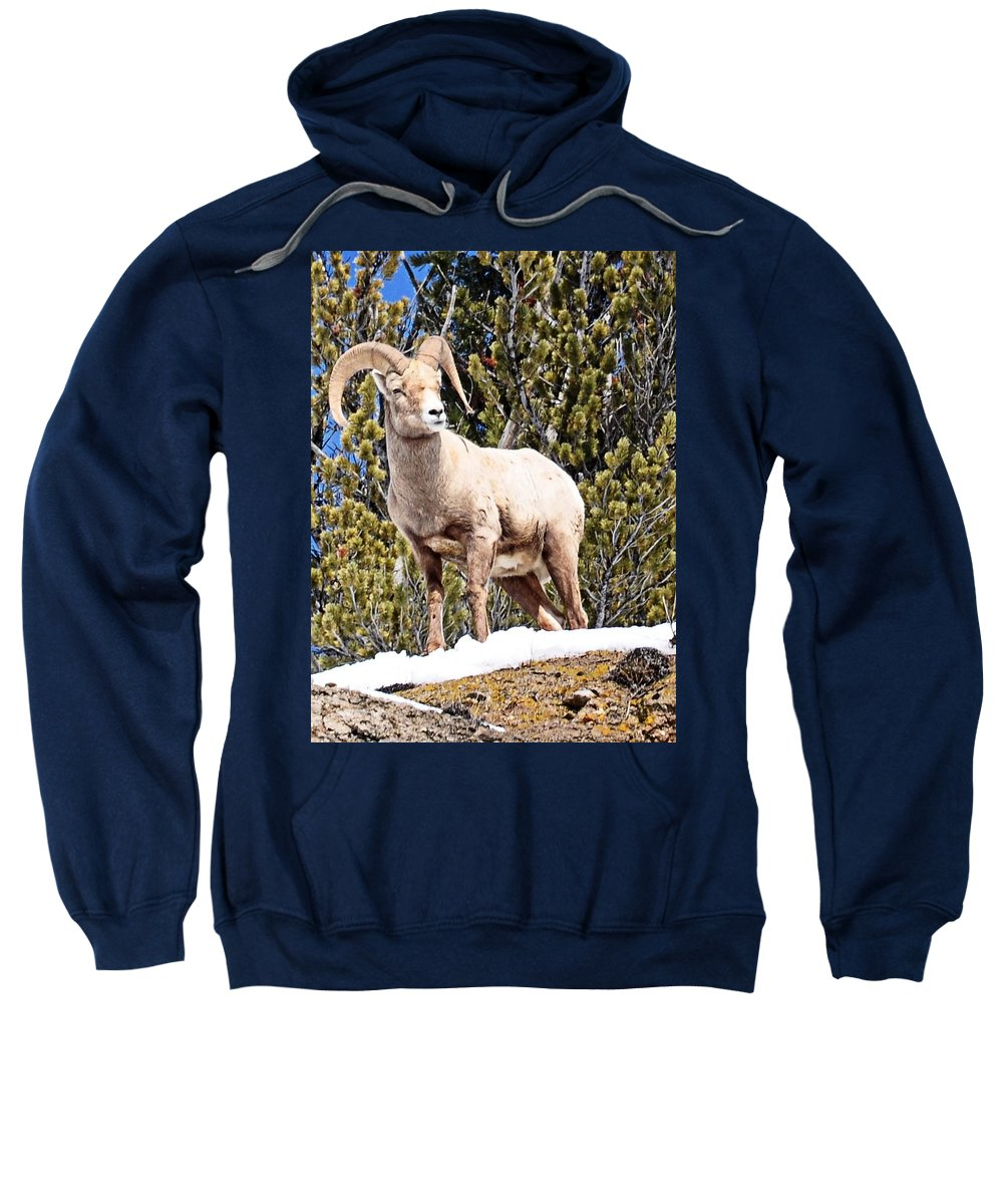 Hoback Junction Sweatshirt featuring the photograph The Perfect Pose by Image Takers Photography LLC - Laura Morgan