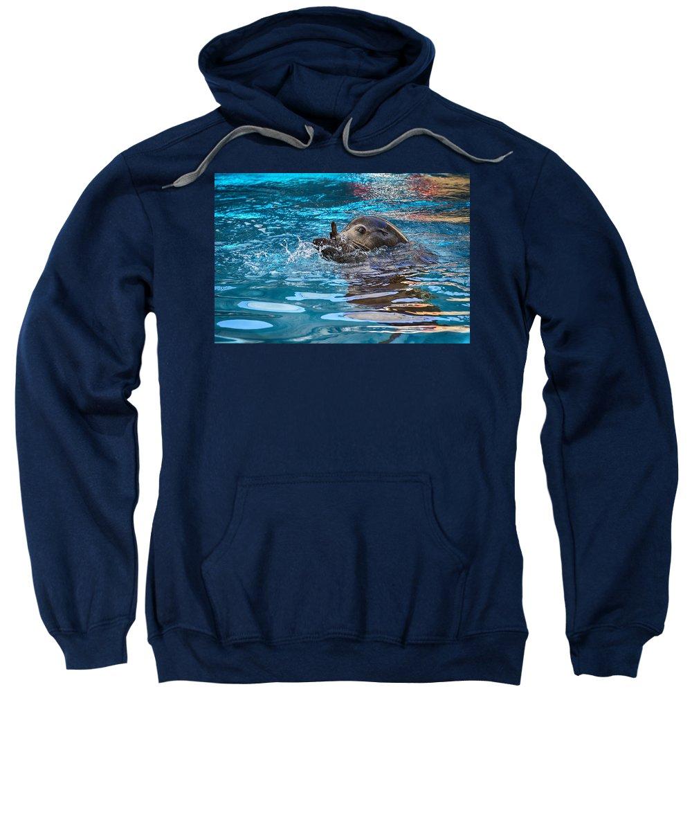 Sea Lion Sweatshirt featuring the photograph Treading Water V2 by Douglas Barnard