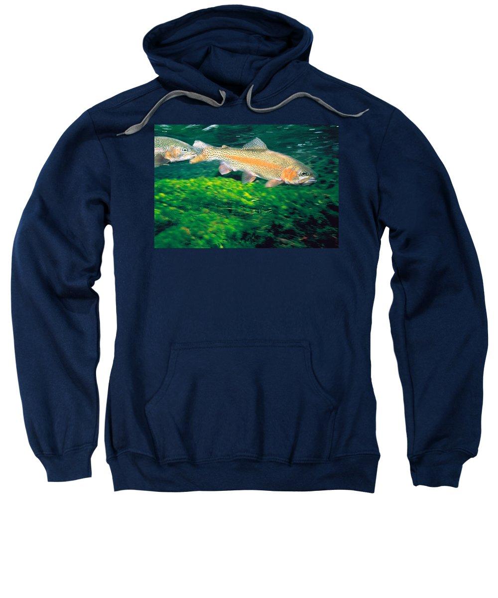 Aquatic Vegetation Hooded Sweatshirts T-Shirts