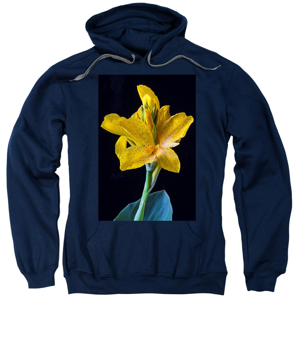 Yellow Canna Flower Sweatshirt featuring the photograph Yellow Canna Flower by Garry Gay