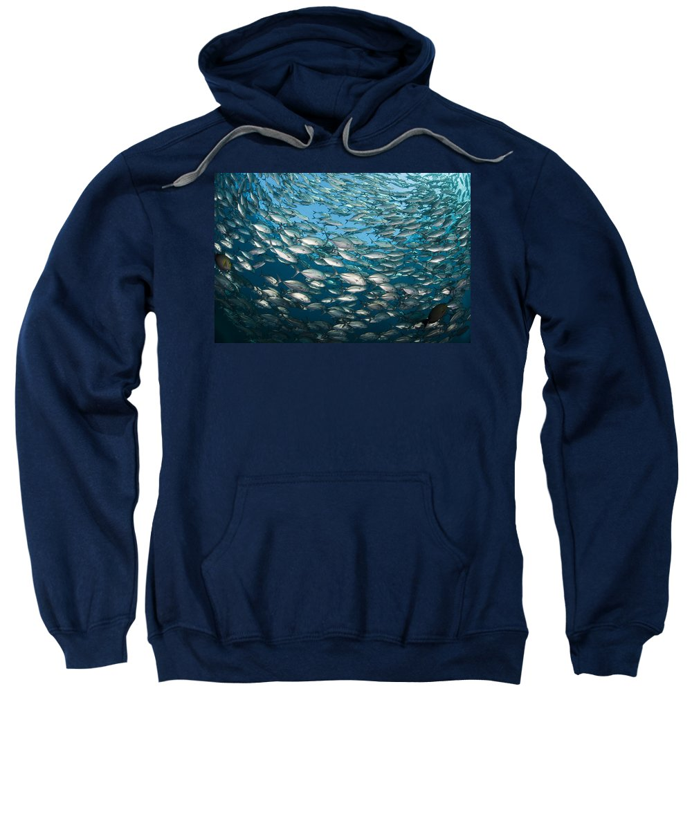 Alot Sweatshirt featuring the photograph Schooling Bigeye Jacks by Dave Fleetham