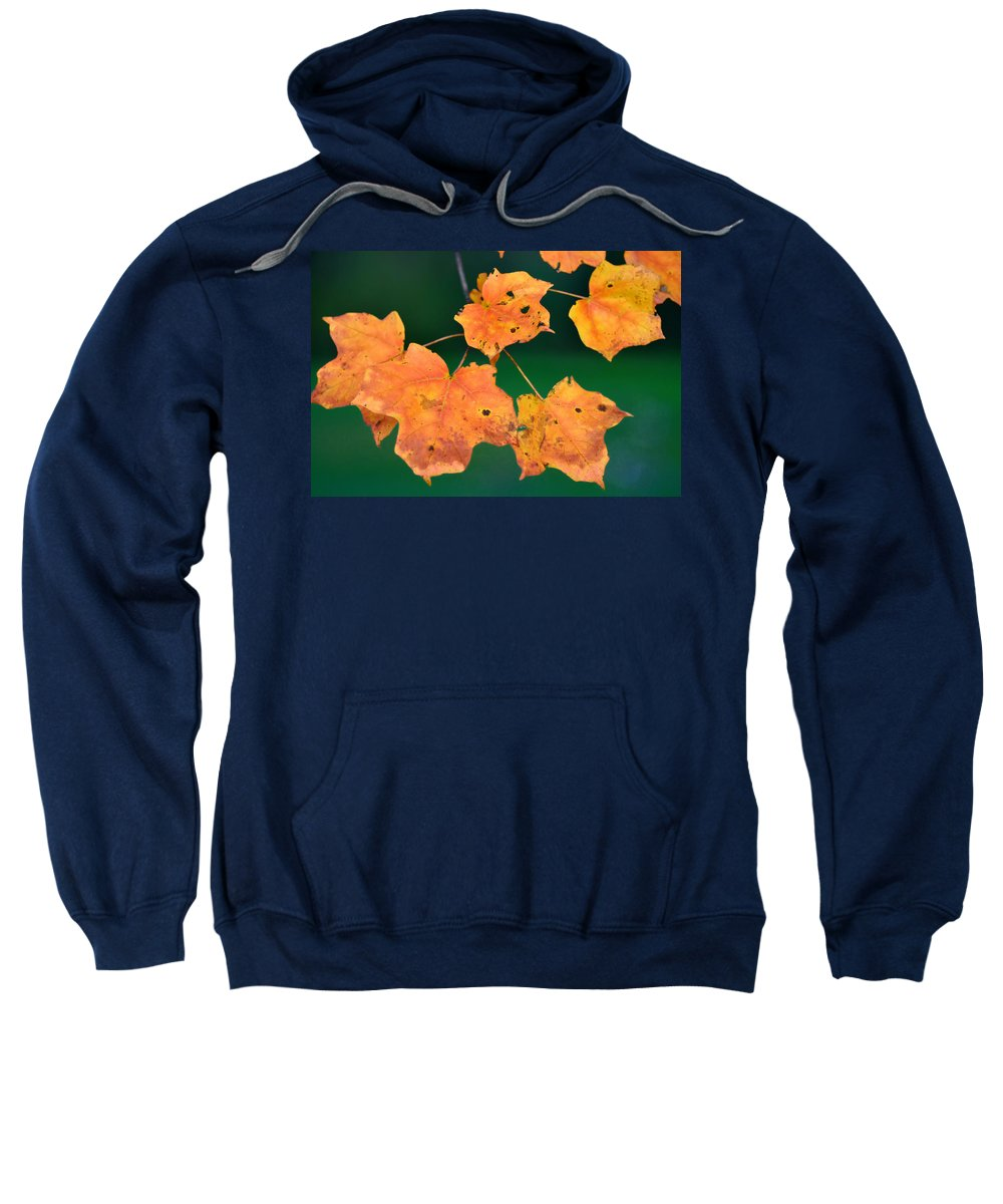 Leaves Sweatshirt featuring the photograph A Change Of Season by Bill Cannon