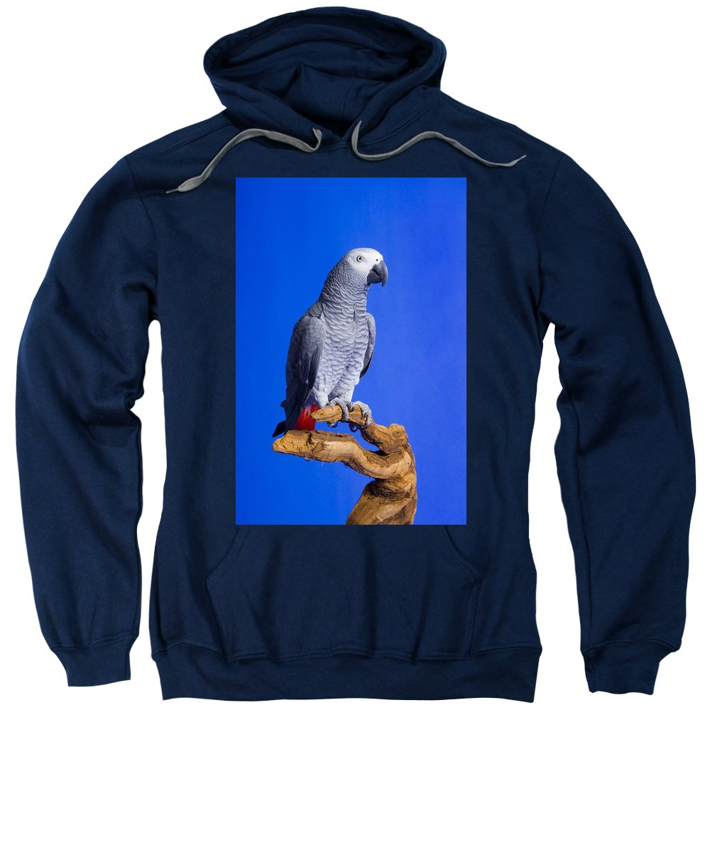Space Sweatshirt featuring the photograph African Grey Parrot by Corey Hochachka