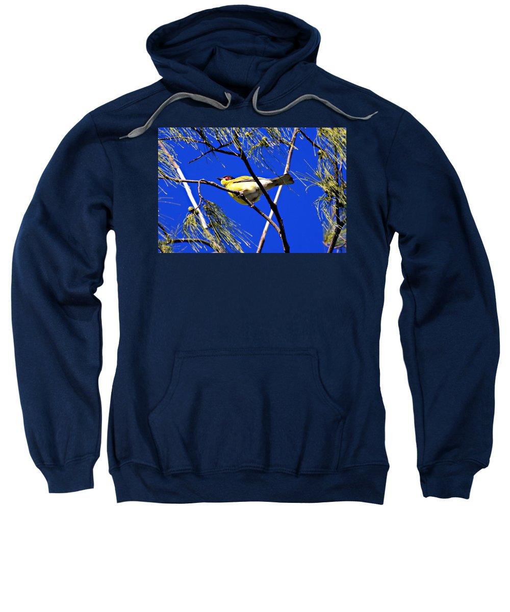 Australian Figbird Sweatshirt featuring the photograph Australian Figbird by Douglas Barnard