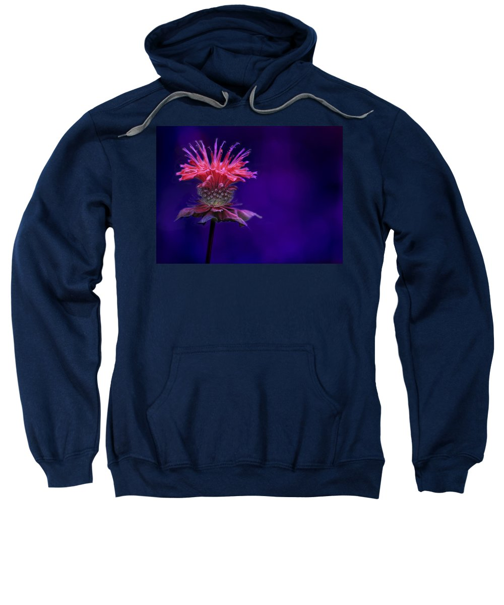Bee Sweatshirt featuring the photograph Bee Balm by Shelley Neff