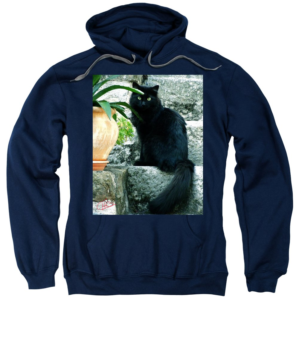 Colette Sweatshirt featuring the photograph Blacky Cat by Colette V Hera Guggenheim