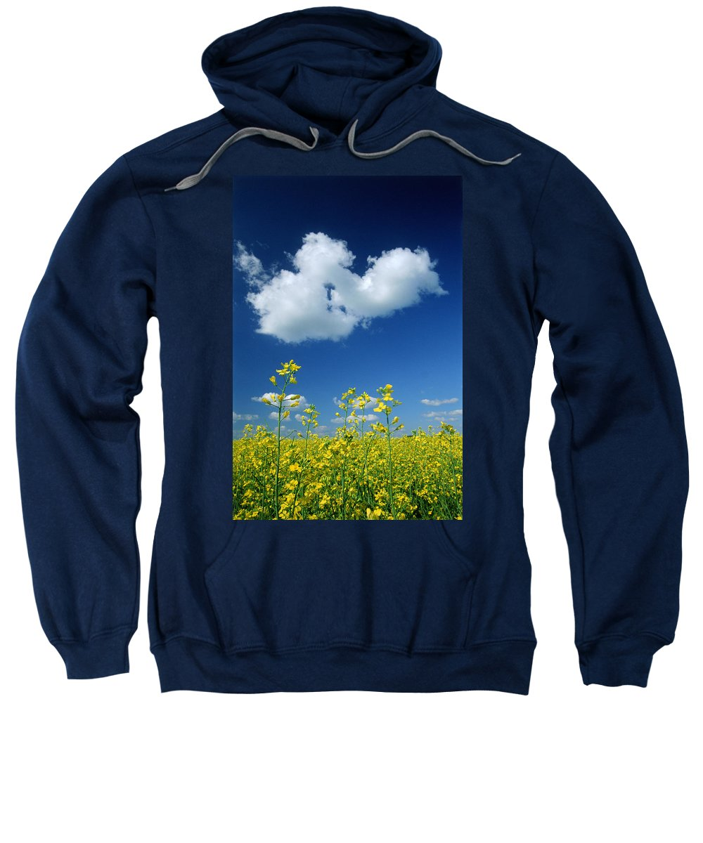 Canola Field Sweatshirt featuring the photograph Canola Flowers, Marquette, Manitoba by Mike Grandmailson