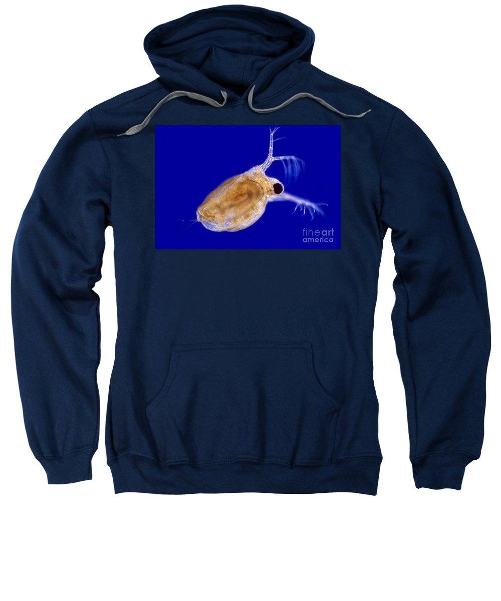Light Microscopy Sweatshirt featuring the photograph Ceriodaphnia by M. I. Walker