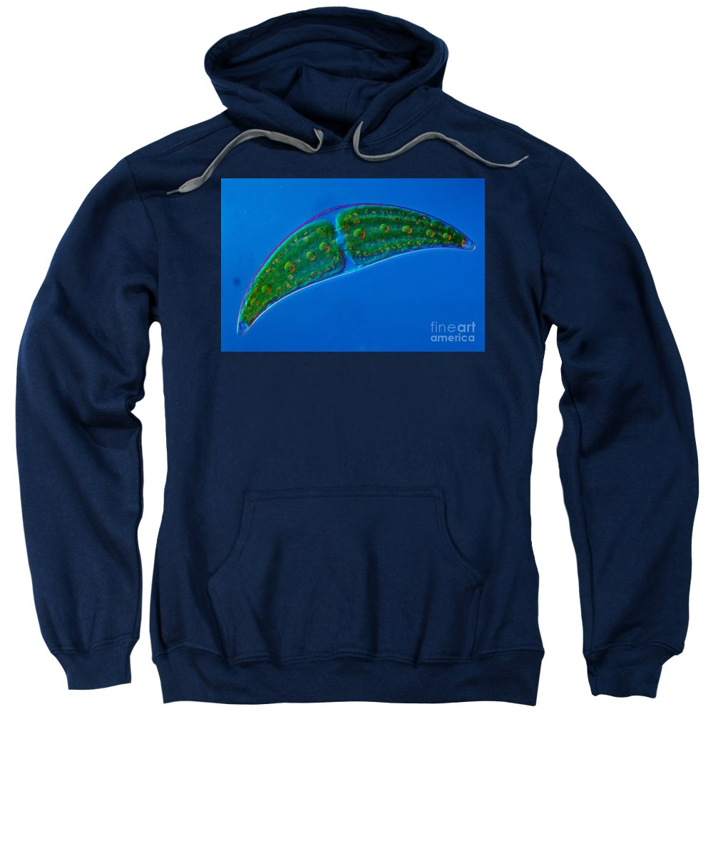 Science Sweatshirt featuring the photograph Closterium Sp. Algae Lm by M. I. Walker