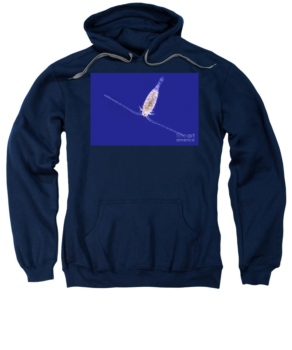 Light Microscopy Sweatshirt featuring the photograph Diaptomus by M. I. Walker