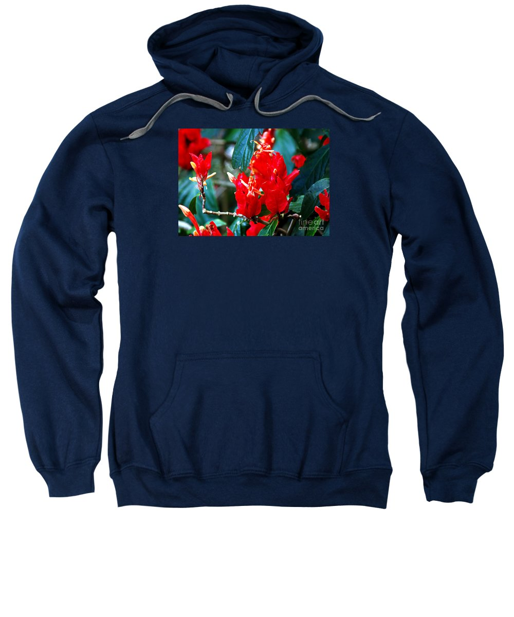Fine Art Print Sweatshirt featuring the photograph Excitement by Patricia Griffin Brett