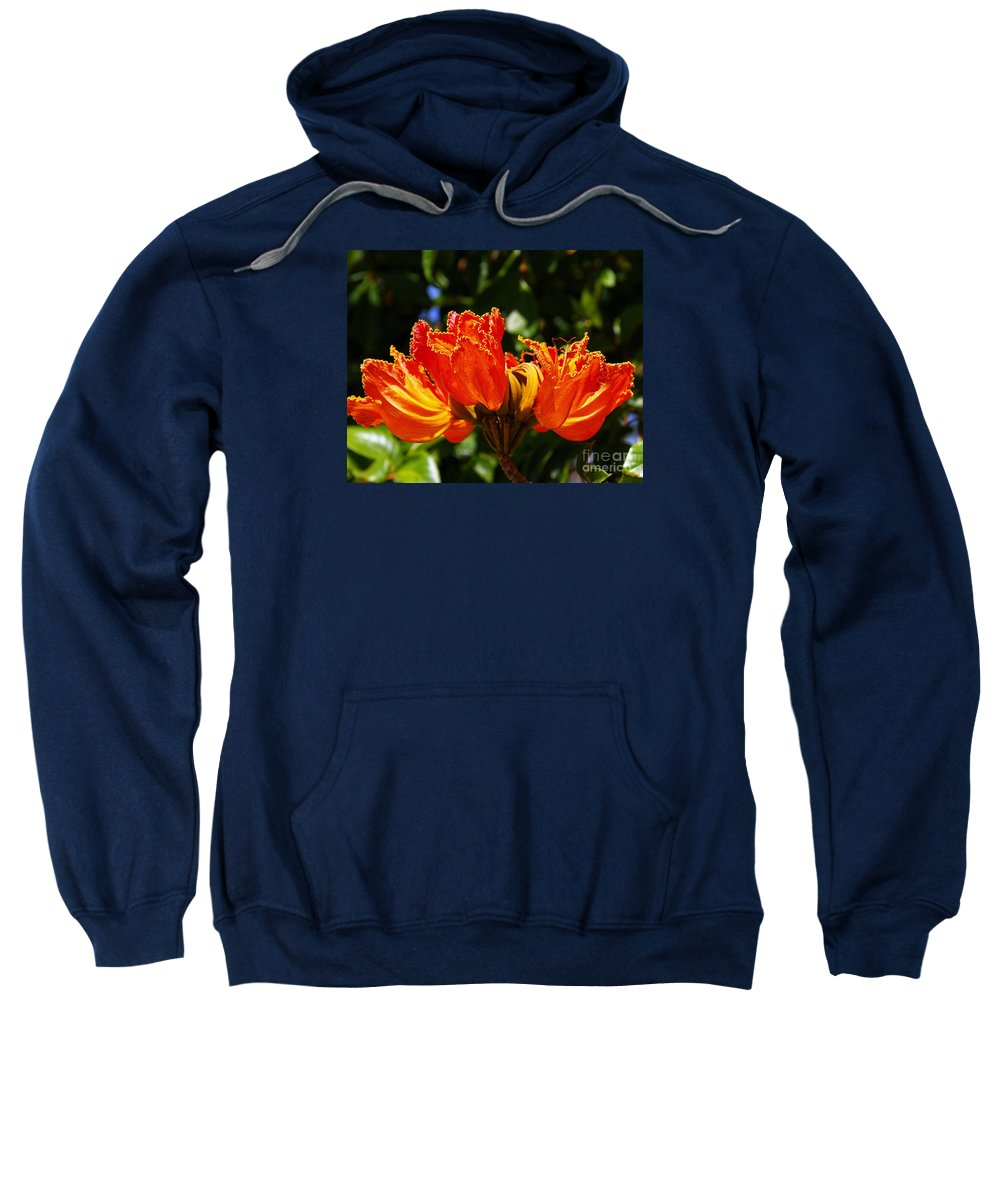 Fine Art Photography Sweatshirt featuring the photograph Fiery Petals by Patricia Griffin Brett