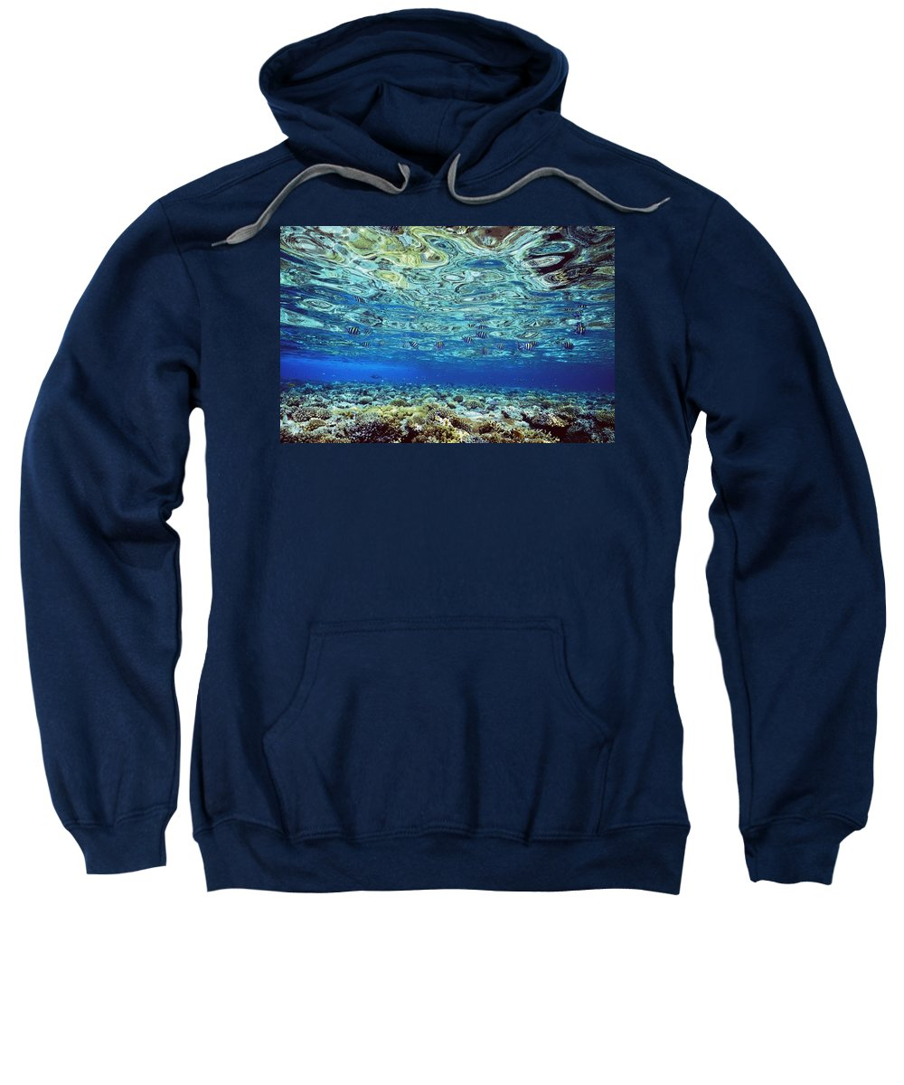 Water Sweatshirt featuring the photograph Fish And Coral Underwater Reflected In by Axiom Photographic