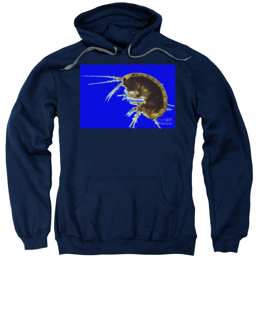 Light Microscopy Sweatshirt featuring the photograph Gammarus by M. I. Walker