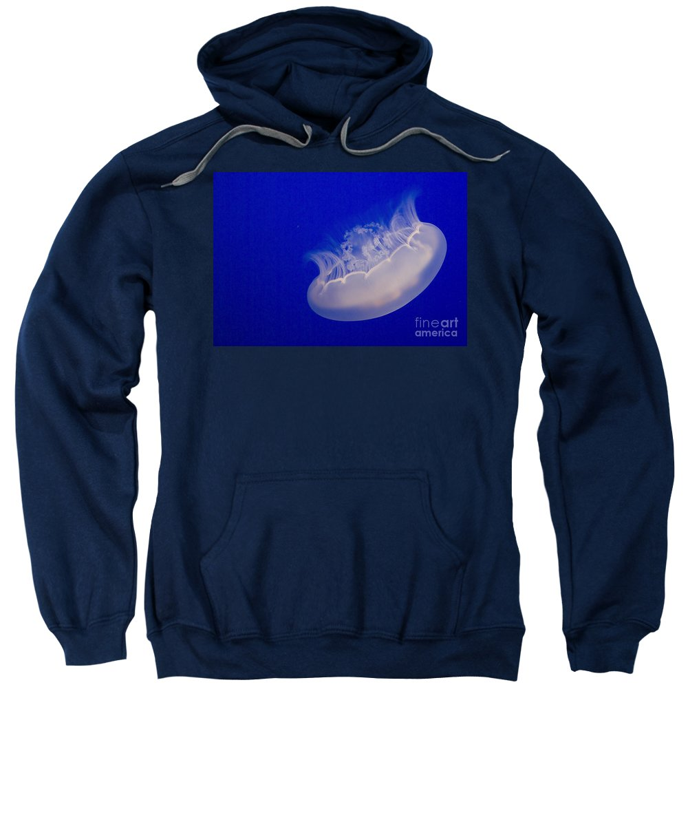 Jellyfish Sweatshirt featuring the photograph Glowing Jelly by Jim And Emily Bush