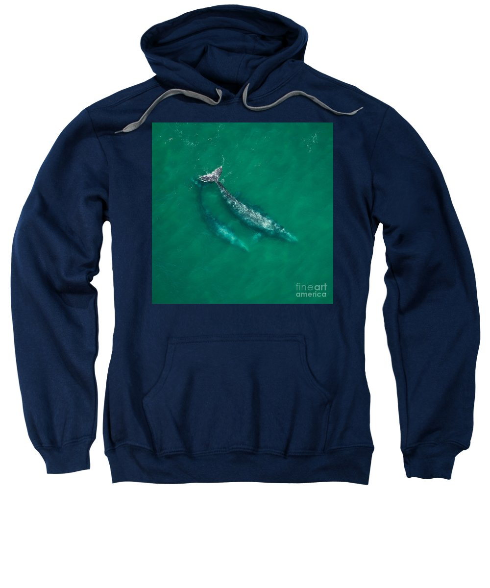 Animal Sweatshirt featuring the photograph Gray Whale Mother And One-year-old Calf by Raul Gonzalez Perez