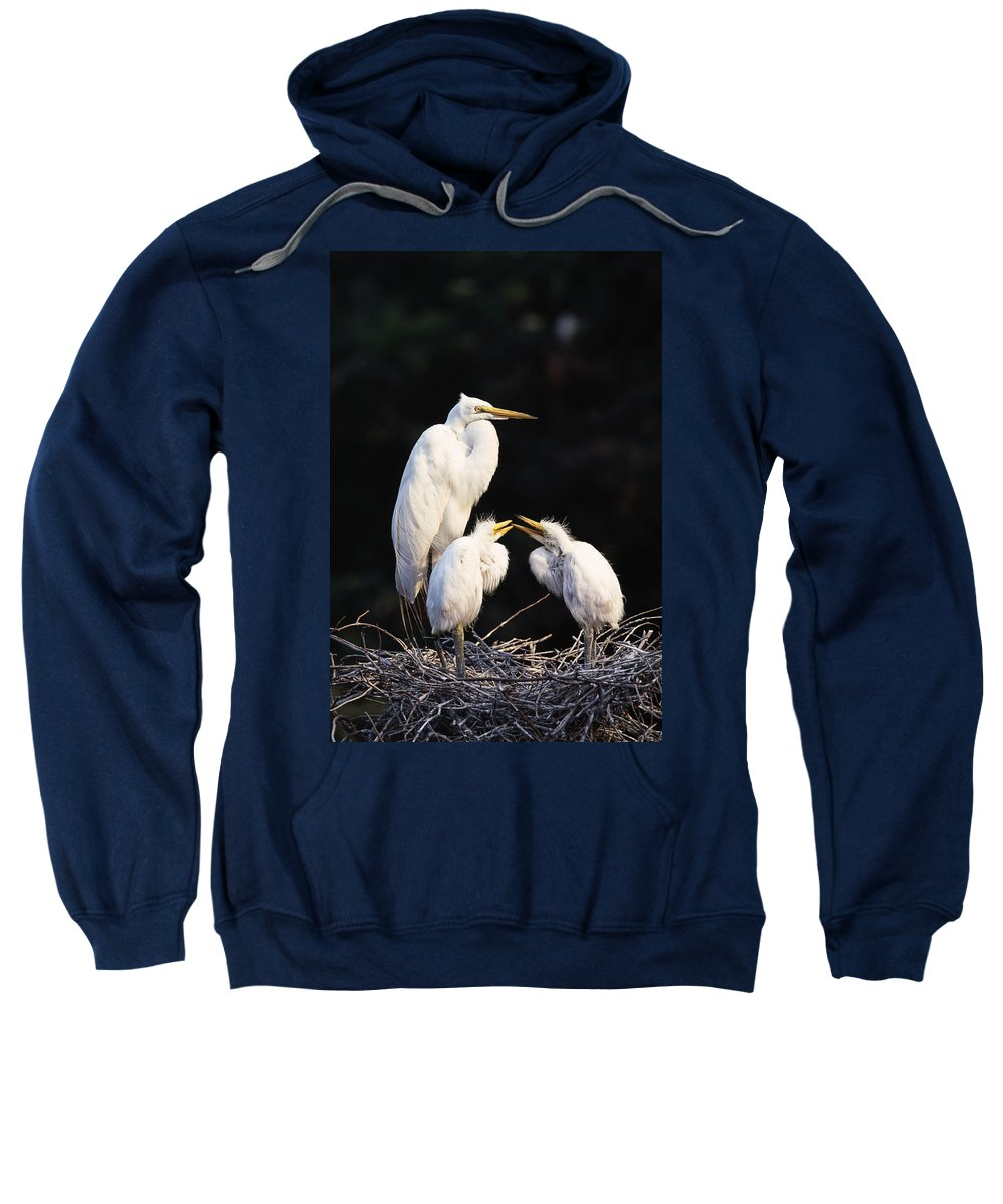 Animal Sweatshirt featuring the photograph Great Egret In Nest With Young by Natural Selection David Ponton