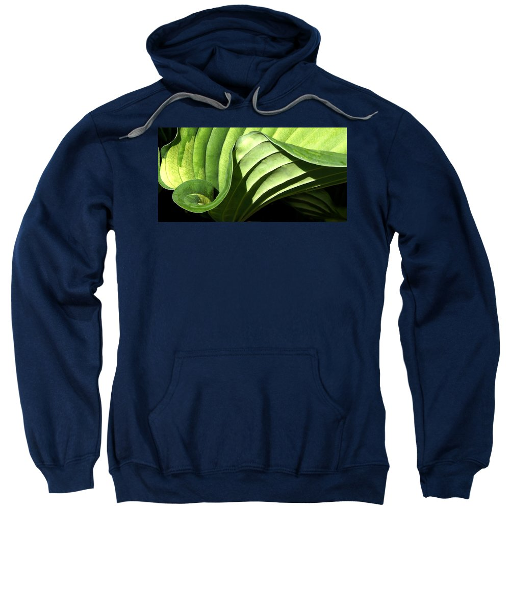 Hosta Sweatshirt featuring the photograph Hosta Leaf by Francesa Miller