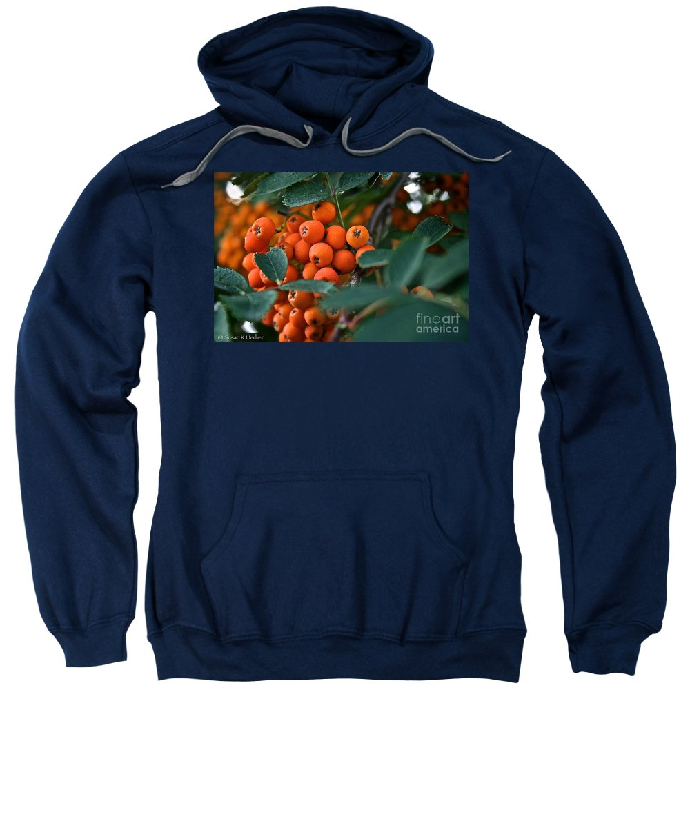 Outdoors Sweatshirt featuring the photograph Mountain Ash by Susan Herber