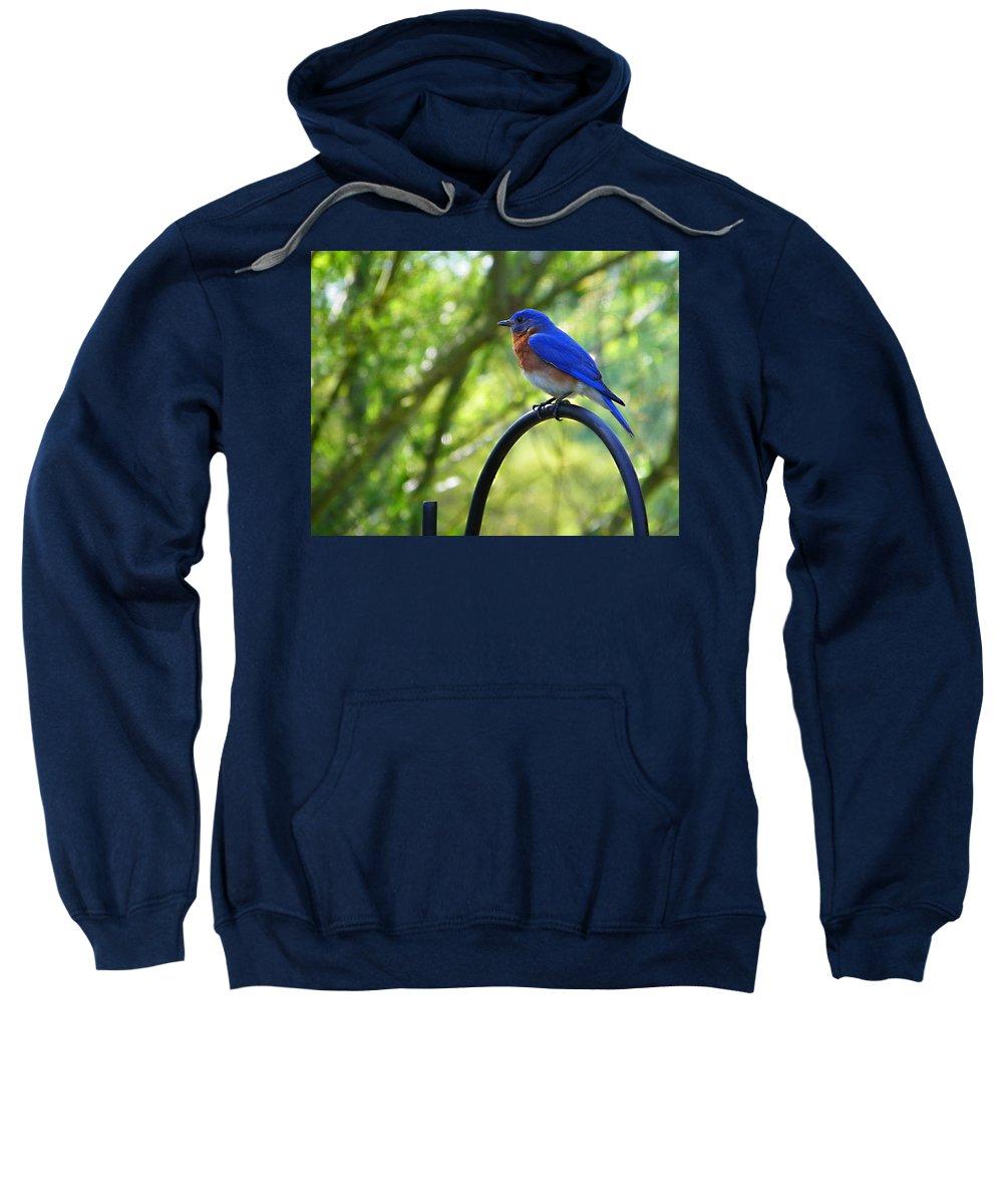 Nature Sweatshirt featuring the photograph Mr Bluebird by Judy Wanamaker