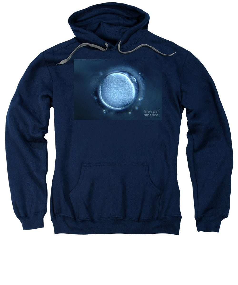 Light Microscopy Sweatshirt featuring the photograph Oocyte by M. I. Walker