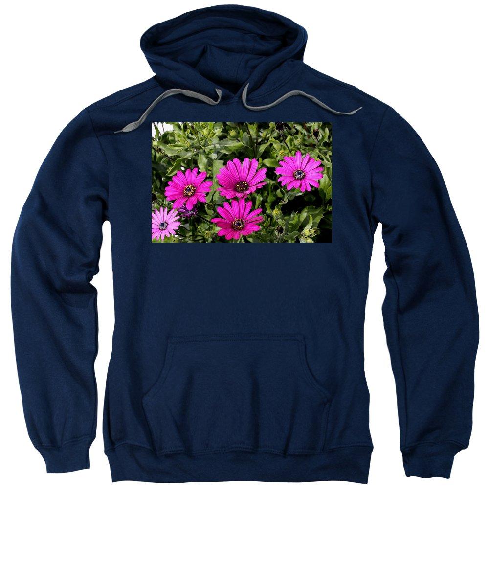 Doug Lloyd Sweatshirt featuring the photograph Pink Daisy's by Doug Lloyd