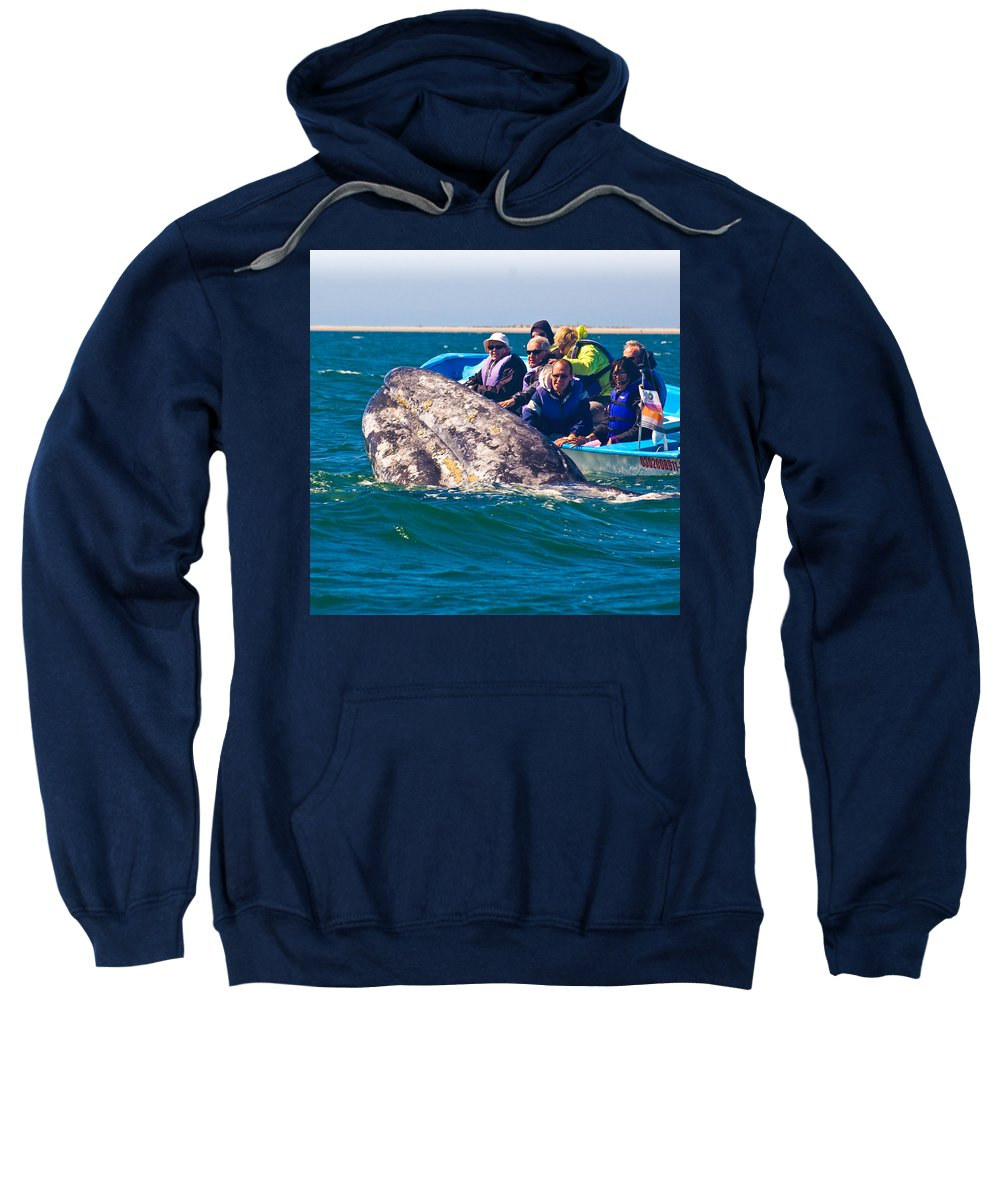 Gray Whale Sweatshirt featuring the photograph Pleased To Meet You by Don Schwartz