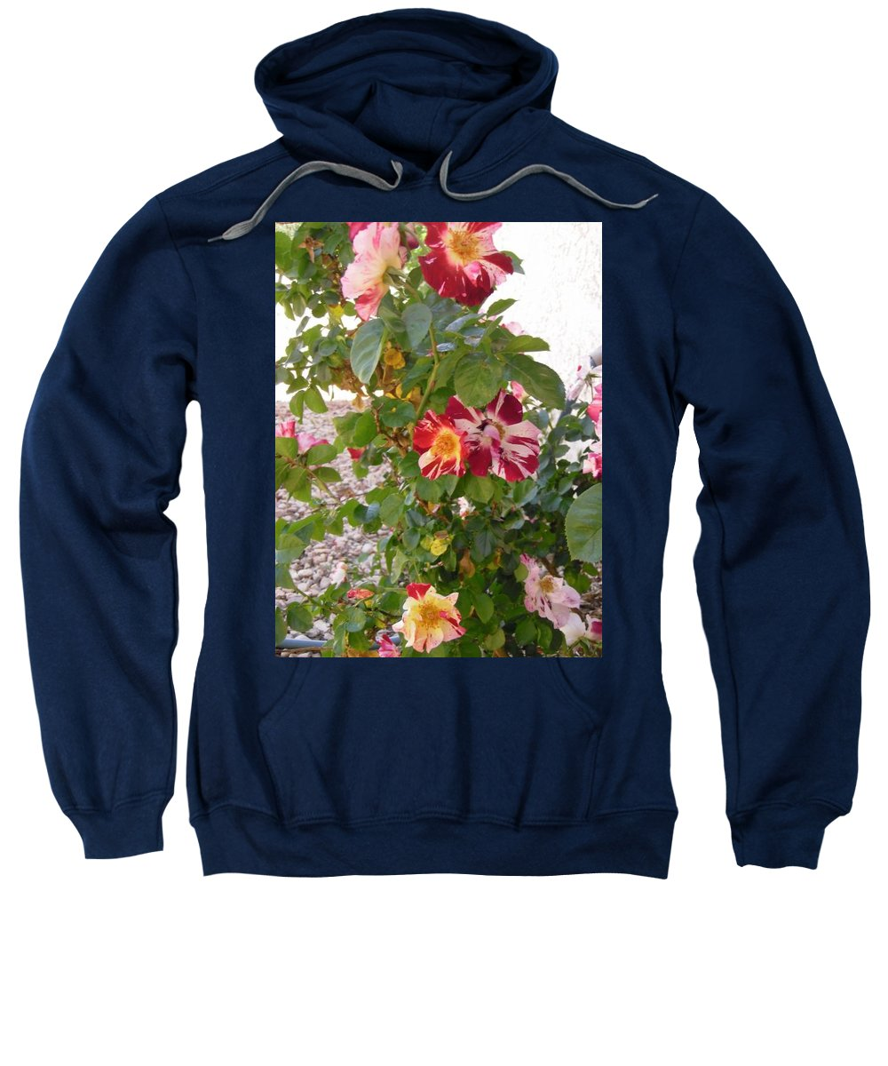 Roses Sweatshirt featuring the photograph Red And White Roses 3 by Stephanie Moore