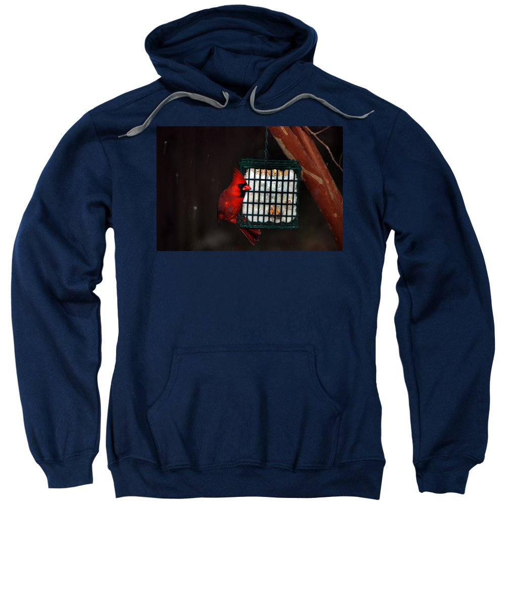 Suet Sweatshirt featuring the photograph Snack Before The Storm by Skip Willits