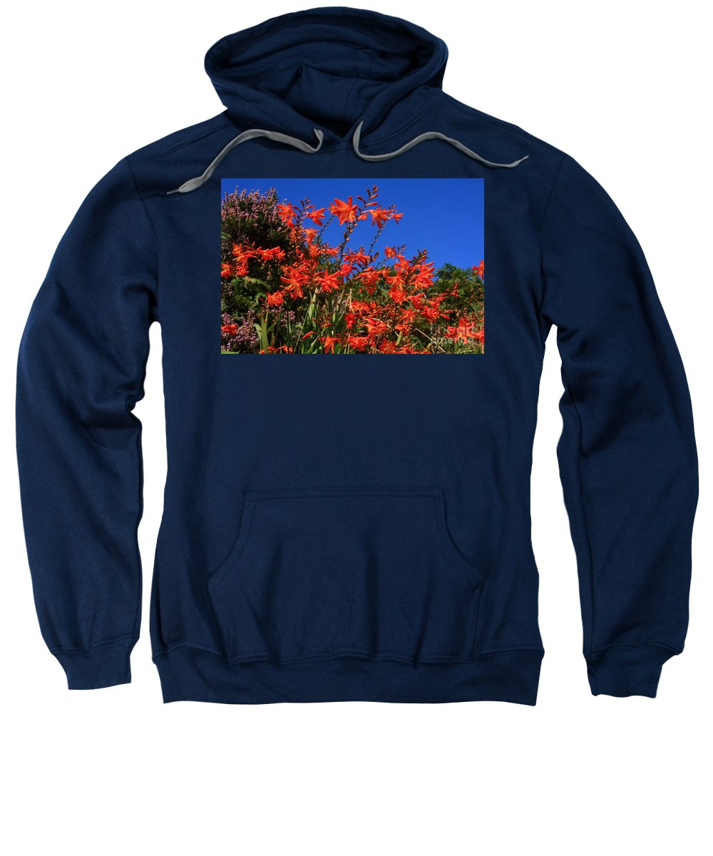 Montbretia Sweatshirt featuring the photograph Montbretia, Summer Wildflowers by Aidan Moran