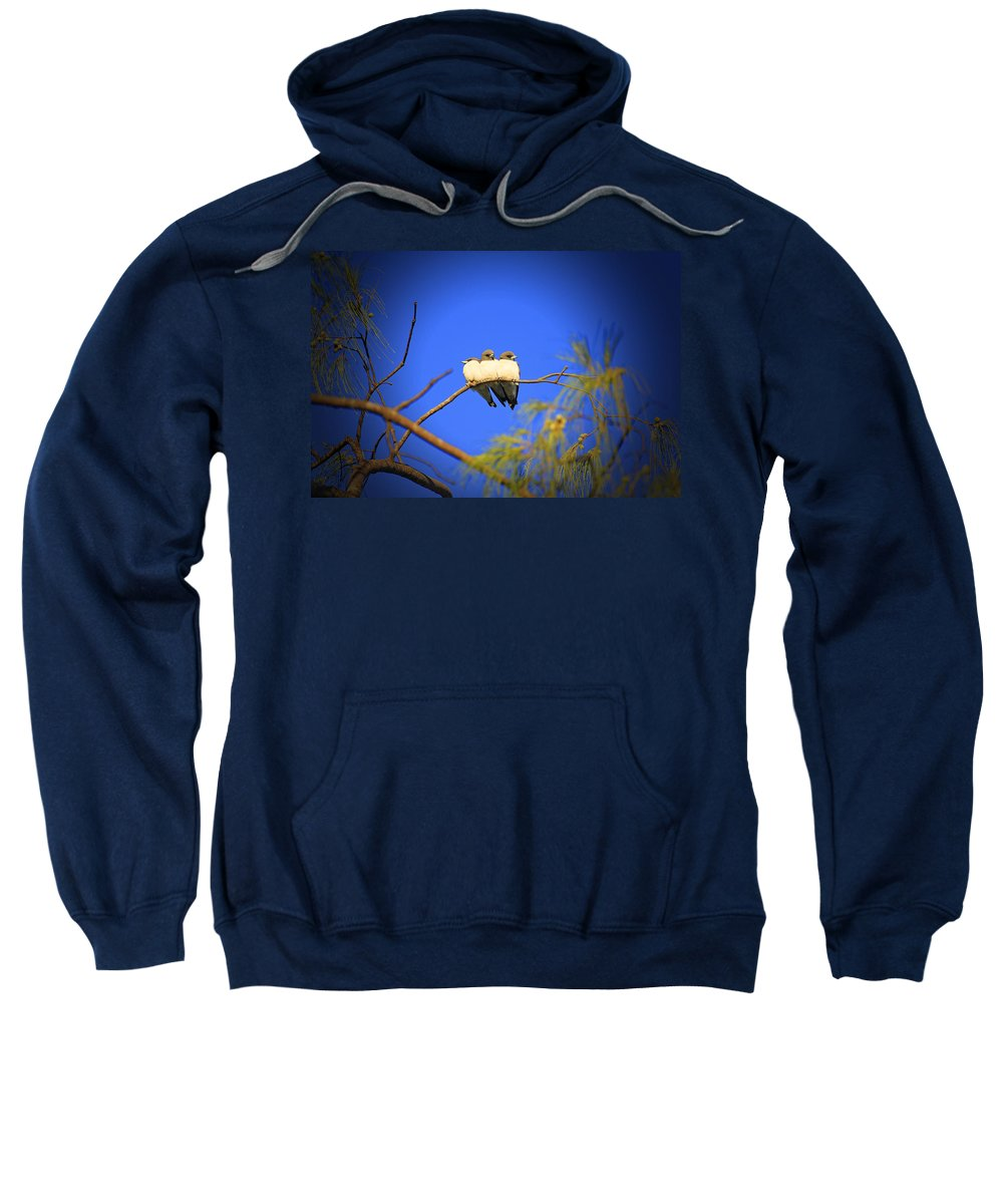 Swallows Sweatshirt featuring the photograph The Three Musketeers by Douglas Barnard