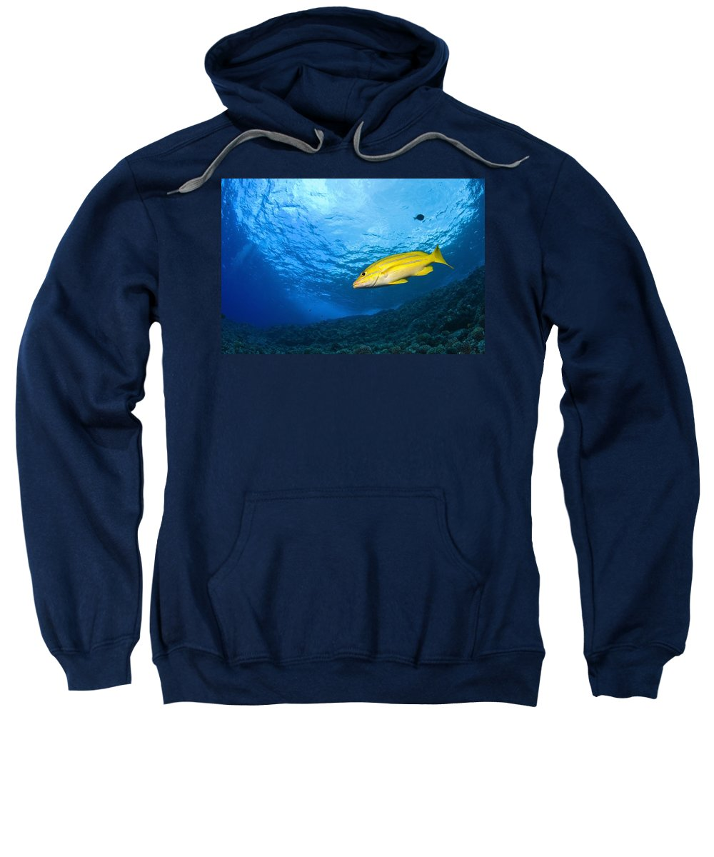 America Sweatshirt featuring the photograph Yellowtail Snapper, Molokini Crater by Stuart Westmorland