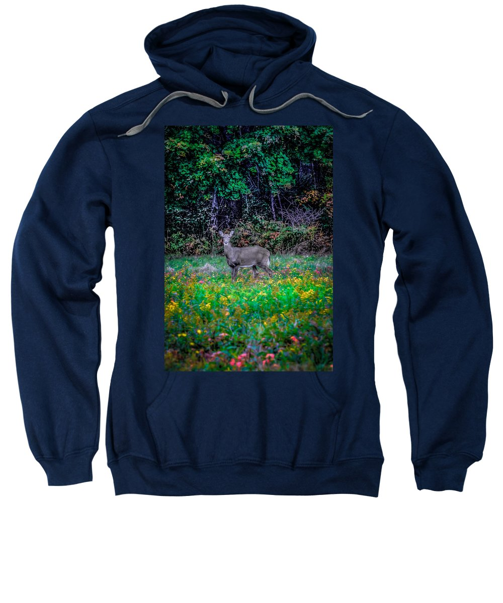 Sweatshirt featuring the photograph Evening Out by David Henningsen