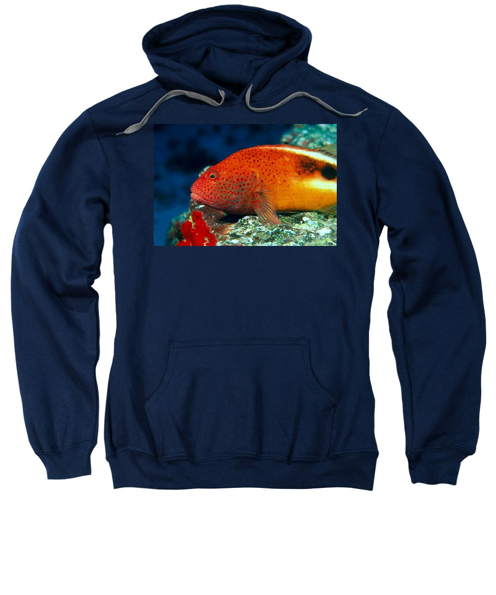 Above Sweatshirt featuring the photograph Blackside Hawkfish by Dave Fleetham - Printscapes