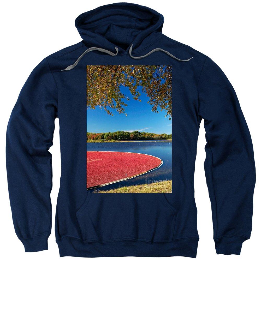 Cape Cod Sweatshirt featuring the photograph Cape Cod Cranberry Bog by Matt Suess