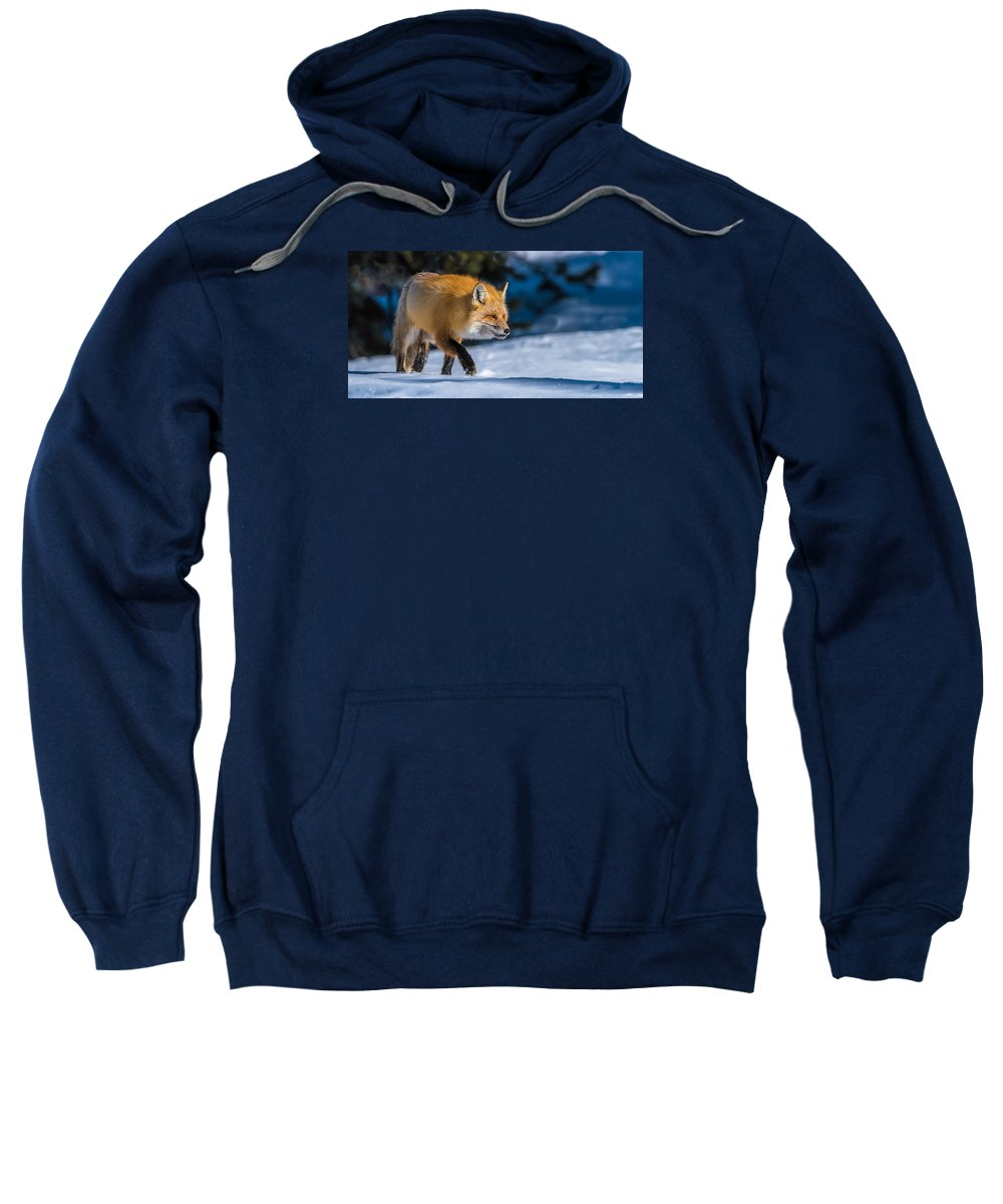 Red Fox Sweatshirt featuring the photograph Handsome Mr. Fox by Yeates Photography