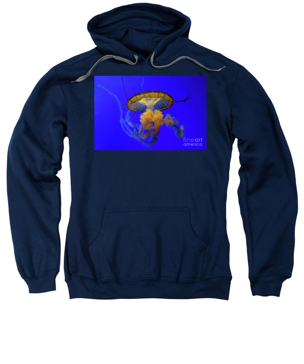 California Academy Of Sciences Sweatshirt featuring the photograph Jellyfish At California Academy Of Sciences In San Francisco, California by David Oppenheimer