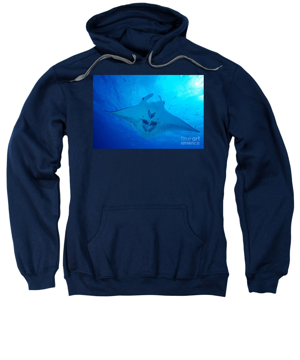 Animal Art Sweatshirt featuring the photograph Midway Atoll, Manta Ray by Ed Robinson - Printscapes
